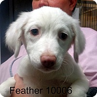 Adopt A Pet :: Feather - baltimore, MD