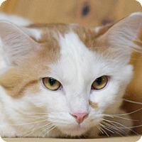 Adopt A Pet :: Ralphie - Calgary, AB