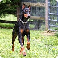 Adopt A Pet :: GUCCI - Greensboro, NC