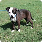 Adopt A Pet :: Chessy (POM-Dols)