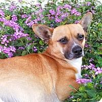 Adopt A Pet :: Mama - san antonio, TX