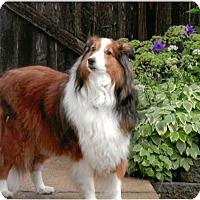 Adopt A Pet :: Alice (ADOPTING PENDING) - Pittsburgh, PA
