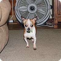 Adopt A Pet :: Spike - Homer, NY