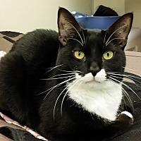Adopt A Pet :: Huey - Westbury, NY