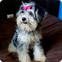 Adopt A Pet :: Dior - Lawrenceville, GA