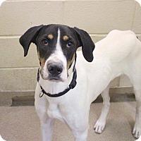 Adopt A Pet :: Clayton - Charlotte, NC