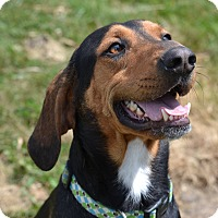 Adopt A Pet :: Festus - Lake Odessa, MI