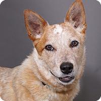 Adopt A Pet :: Rex - Sudbury, MA