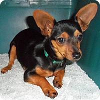 Adopt A Pet :: Rhianna - Camden, SC