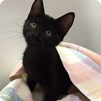 Adopt A Pet :: Rosa - Oakland Park, FL
