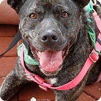 Adopt A Pet :: Citrus - Washington, DC