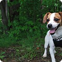 Adopt A Pet :: Cassie - New Castle, PA