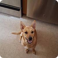 Adopt A Pet :: Arlo - Lomita, CA