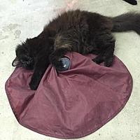 Adopt A Pet :: Dylan - St. James City, FL