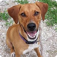 Adopt A Pet :: Bambi - Geneseo, IL