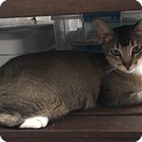 Adopt A Pet :: Cinnamom - Palm Springs, CA