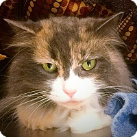 Adopt A Pet :: Jenny - Webster, MA
