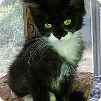 Adopt A Pet :: Cassie - Eugene, OR