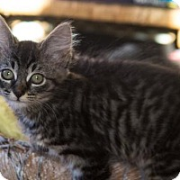 Adopt A Pet :: Madeline - Vancouver, WA