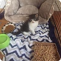Adopt A Pet :: Odell - Hamden, CT