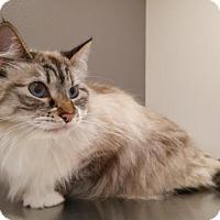 Adopt A Pet :: Sophie - Carson City, NV