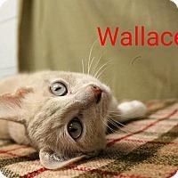 Adopt A Pet :: Wallace - Newport, KY