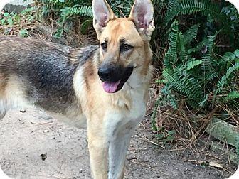 German Shepherd Dog Dog for adoption in Houston, Texas - Melissa - Adoption Pending
