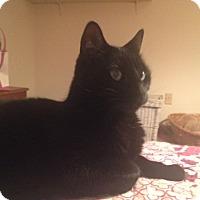 Adopt A Pet :: Honzo - Acushnet, MA