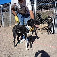 Adopt A Pet :: Nitro - Golden Valley, AZ
