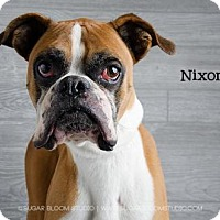 Adopt A Pet :: Nixon - Denver, CO