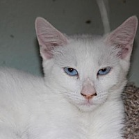 Adopt A Pet :: Twinkles - Morgan Hill, CA