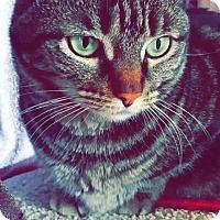 Adopt A Pet :: Sally - Santa Clarita, CA
