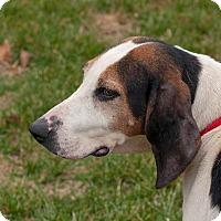 Adopt A Pet :: Addie - Buffalo, NY
