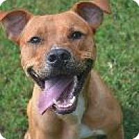 Adopt A Pet :: Rocky - Raleigh, NC