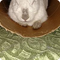 Adopt A Pet :: Ferdinand - Conshohocken, PA