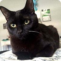 Adopt A Pet :: Arthur - Lombard, IL