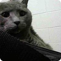 Adopt A Pet :: KITSY - Atlanta, GA