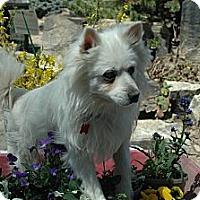 Adopt A Pet :: General - Ft. Collins, CO