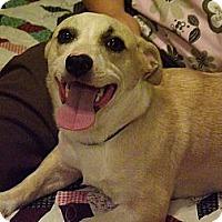 Adopt A Pet :: Peanut - Hollis, ME