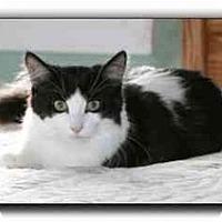 Adopt A Pet :: Moe - Howell, MI