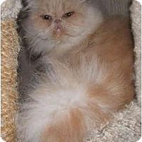 Adopt A Pet :: Regis - Davis, CA