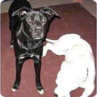 Adopt A Pet :: Rosie - Dayton, OH