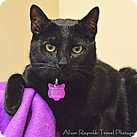 Adopt A Pet :: BOOKER - Encino, CA