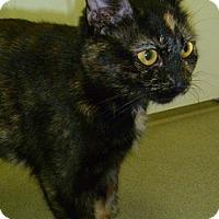 Adopt A Pet :: Mocha - Hamburg, NY