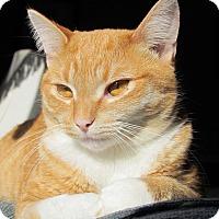 Adopt A Pet :: Spitz - Douglas, ON