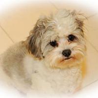 Adopt A Pet :: King - N. Babylon, NY