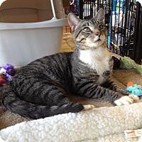 Adopt A Pet :: Tigger - Adoption Pending - Horsham, PA