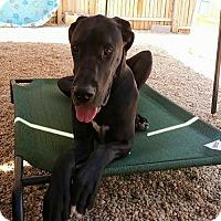 Adopt A Pet :: Spartacus - Baden, PA