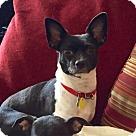 Adopt A Pet :: Kate (MD)