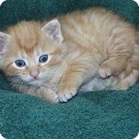 Adopt A Pet :: Nemo - Shelby, MI